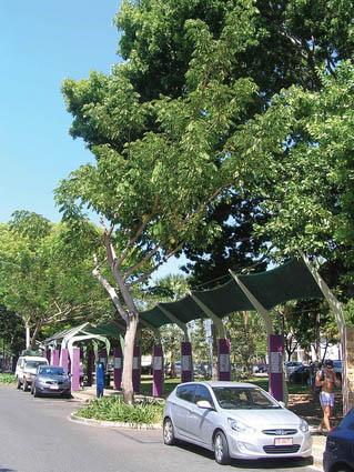 """""""Дождевые деревья"""" Альбизии Семен (Albizia saman), растущие вдоль Smith Street в Дарвине, со временем сопрекаснутся кронами над дорогой, образовав роскошный шатер/навес над ней. Image: Clouston Associates"""