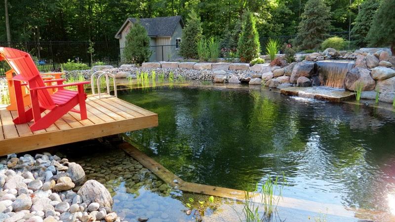 Этот натуральный плавательный бассейн с деревянным настилом разработан Genus Loci Ecological Landscapes Inc.