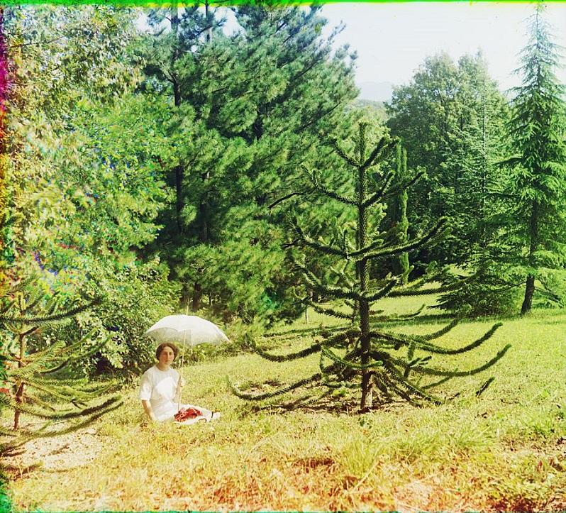 Aurocaria [Араукария]. В царском парке Дагомыс. 1912 г. © С.М. Прокудин-Горский